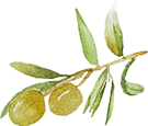 oliva-aceite