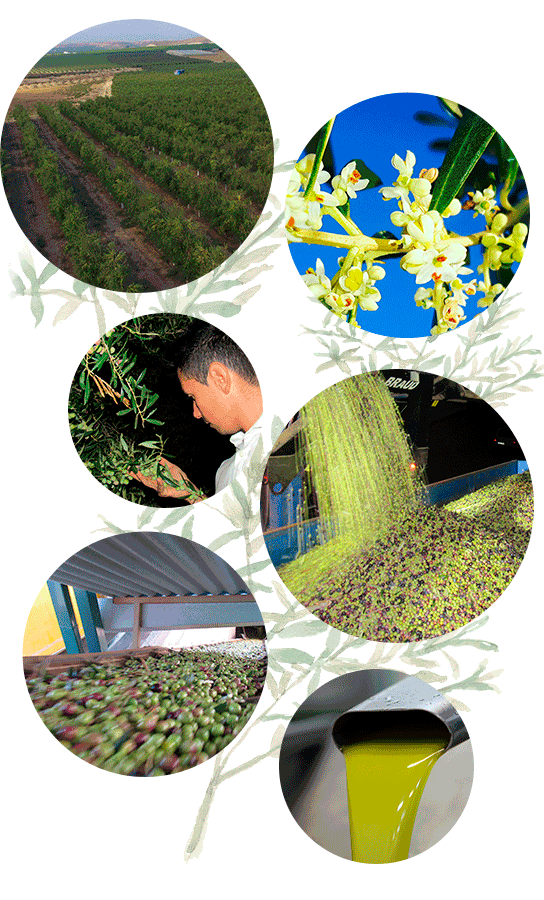 somos-aceite-oliva-andalucia